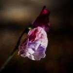 05-01-Redigera-feb-2019_elip.jpg
