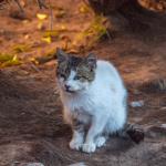 Söt katt i Marrakesh