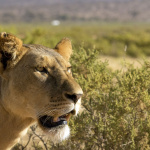 safari (1).jpg