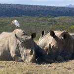 safari (2).jpg