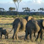 safari (3).jpg