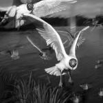 Rasti_Mahshid_Birds.jpg