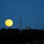 Moonshine best (2).jpg